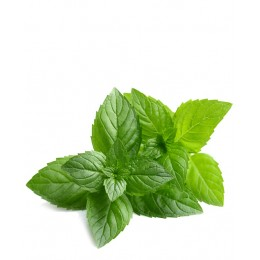 Ulei Esențial Menta Pur Organic ECOCERT 10 ml | Uleiul Răcoritor