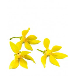 Ulei Esențial Ylang Ylang  Pur Organic ECOCERT 10 ml  | Uleiul Senzualității