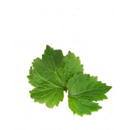 Ulei Esențial Paciuli Pur Organic ECOCERT 10 ml | Uleiul Antiinflamator