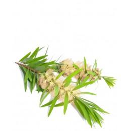 Ulei Esențial Niaouli Pur Organic ECOCERT 10 ml | Uleiul Expectorant
