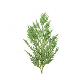 Ulei Esențial Chiparos Pur Organic ECOCERT 10 ml | Uleiul Antitusiv