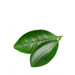 Ulei Esențial Portocală Amară Pur Organic ECOCERT 10 ml|  Uleiul Antispasmodic