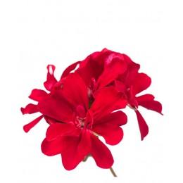 Ulei Esențial Mușcată-Trandafir Pur Organic ECOCERT 10 ml | Uleiul Feminității