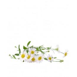 Ulei Esențial Mușețel Roman Pur Organic ECOCERT 2.5 ml| Uleiul Anticolici